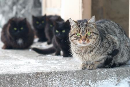 gato negro: Grupo de los gatos sentados y mirando a cámara