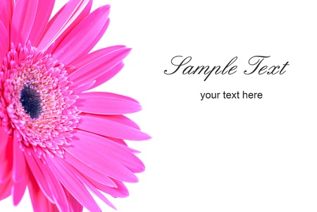 Purple flower gerbera isolated on white background Stock Photo - 13196213