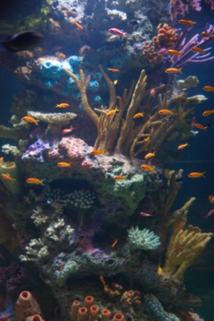 Aquarium with tropical fish and coral reef in sunlight Stock Photo - 13549524