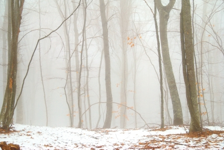 Winter snowy forest in the dense fog  Stock Photo - 15408411
