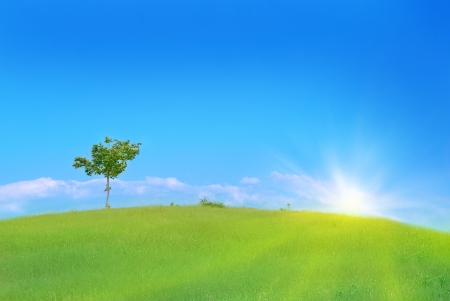 Lonely tree in the field with green grass, blue sky and clouds
