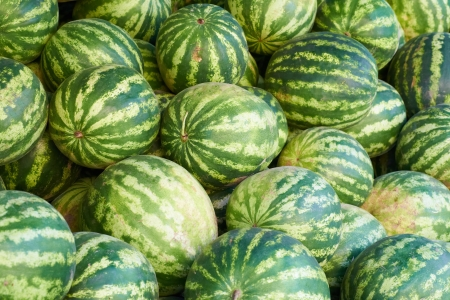Pattern of many green watermelons. Agricultural background