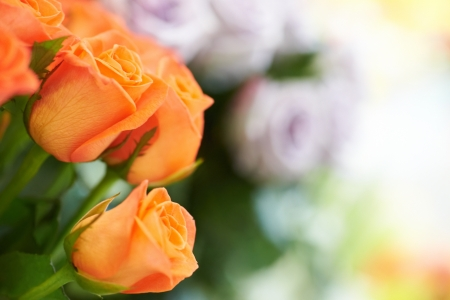 Bunch of red and orange beautiful roses Stock Photo - 15803296