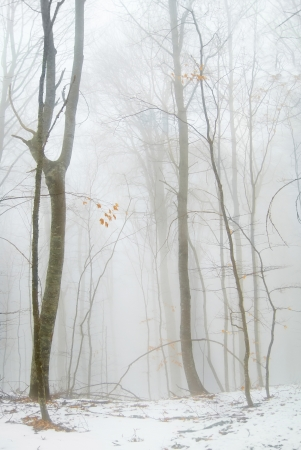 Winter snowy forest in the dense fog  Stock Photo - 16859164