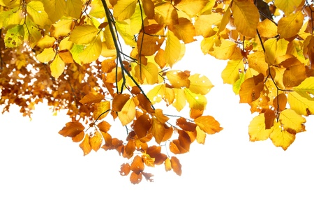 Autumn leaves isolated on the white background Stock Photo - 16842528