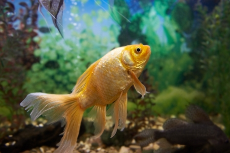 Tropical colorful fishes swimming in aquarium with plants Stock Photo - 16842511
