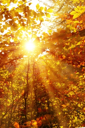 Autumn forest with trees and yellow leaves with bright sun Stock Photo
