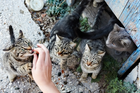 Group of wild black, gray stripped cats