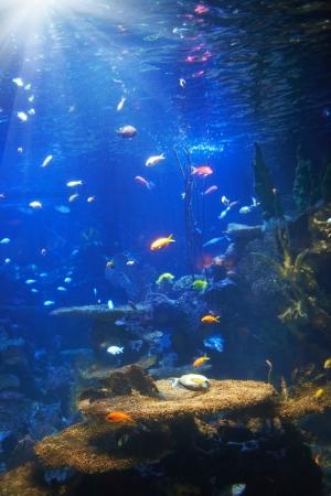 arrecife: Peces tropicales cerca de los arrecifes de coral con el agua del oc�ano azul Foto de archivo