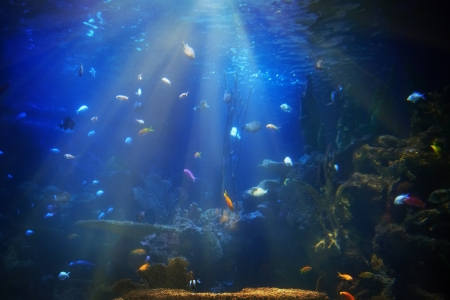 Tropical fish near coral reef with blue ocean water photo