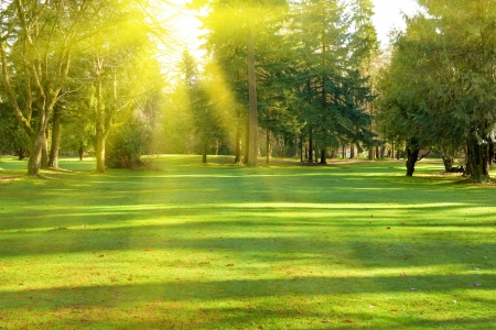 country park: Green lawn with trees in park under sunny light Stock Photo