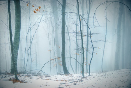 Winter snowy forest in the dense fog  photo