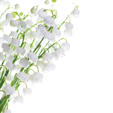 White flowers lilies of the valley isolated on white background photo