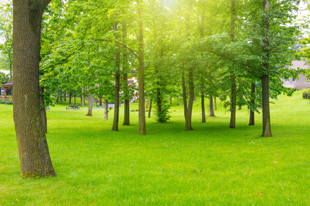 green landscape: Green lawn with trees in park under sunny light Stock Photo