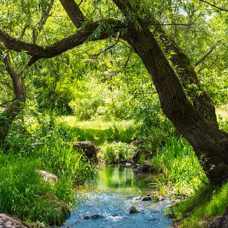 Stream in den tropischen Wald. Umwelt sonnige Landschaft