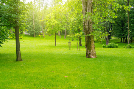 Green lawn with trees in park under sunny light photo