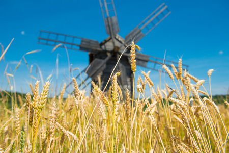 Mill on the wheat field with blue sky photo