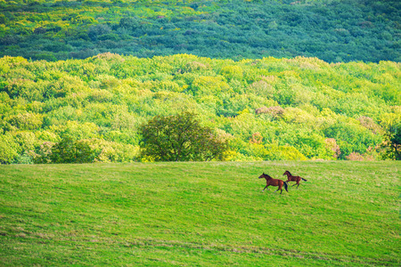 vista: Two horses on green meadow and blue sky with clouds
