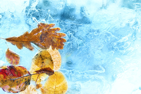 branches and leaves: Fallen autumn leaves in the blue ice. Stock Photo