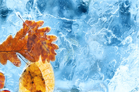 snow crystal: Fallen autumn leaves in the blue ice.
