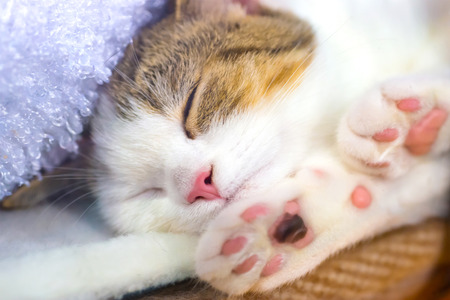 Cute little kitten with pink paws sleeps on a blanket photo