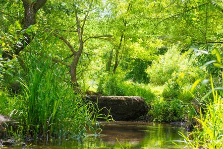 feuille arbre: Stream dans la for�t tropicale. Paysage ensoleill� environnement Banque d'images