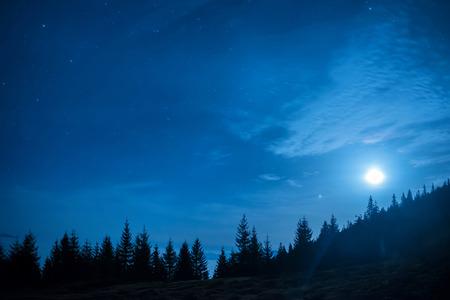 arbol de pino: Bosque de pinos bajo la luna y el azul oscuro cielo nocturno con muchas estrellas. Fondo del espacio
