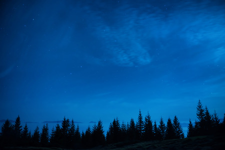 Forest of pine trees under blue dark night sky with many stars. Space background photo