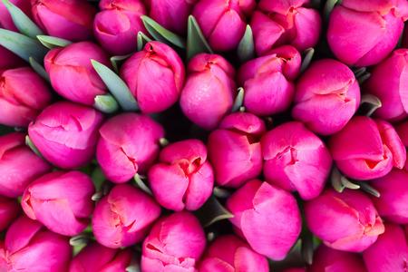Verse roze tulpen met groene bladeren-natuur voorjaar achtergrond. Soft focus en bokeh