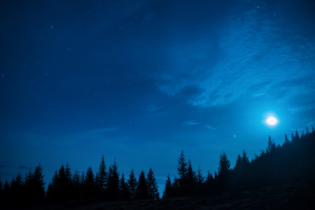 Bos van pijnbomen onder maan en blauwe donkere nacht hemel met veel sterren. Ruimte achtergrond Stockfoto