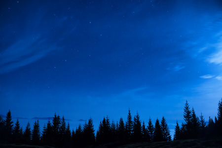 Forest of pine trees under blue dark night sky with many stars. photo