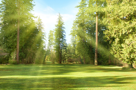 Green park with trees in park under sunny light. Natural spring environment Standard-Bild