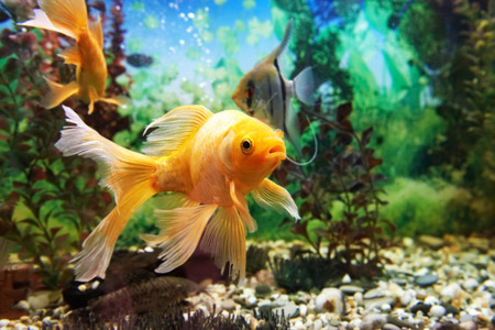 Tropical colorful fishes swimming in aquarium with plants