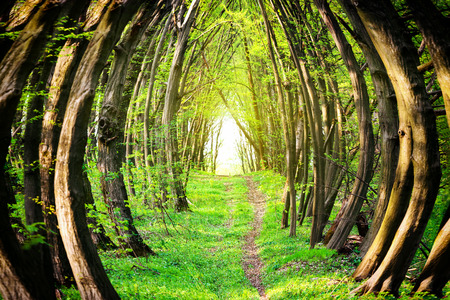 Magical path through beautiful green forest with green trees
