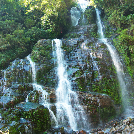 waterfall: Beautiful waterfall in the forest surrounded by green trees