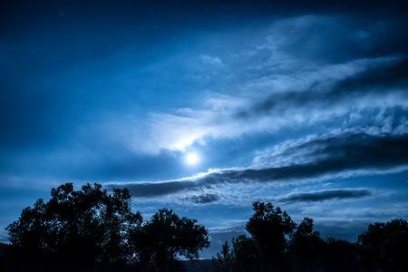 luz de luna: la noche de la Luna Llena en el bosque con los �rboles y las estrellas que brillan