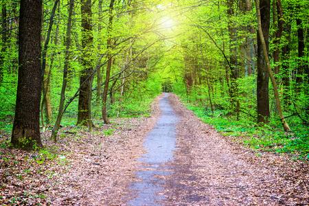 Zonnige weg in een prachtige groene park. Bos van de lente met groene bomen Stockfoto