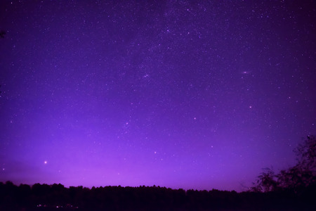 Beautiful purple night sky with many stars above the forest. Milkyway space background
