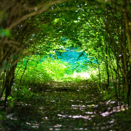 Magical forest with path to the light through dark tunnel of trees 스톡 콘텐츠