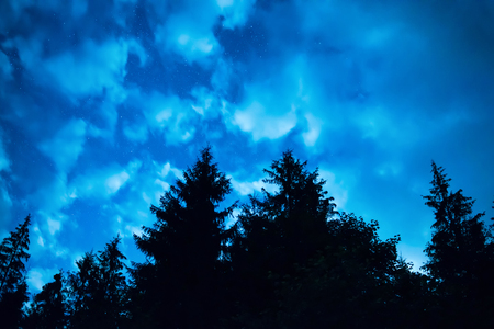 black forest: Black forest with trees over blue night sky with many stars. Milkyway on background