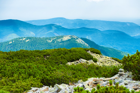 green ridge: Ridge of blue mountains covered with green forest. Ukraine, Carpathian Stock Photo