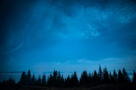 Forest of pine trees under blue dark night sky with many stars. Winter christmas background