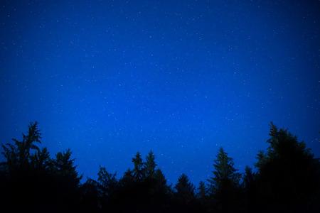 Dark blue night pine trees over sky with many stars. Milky way background