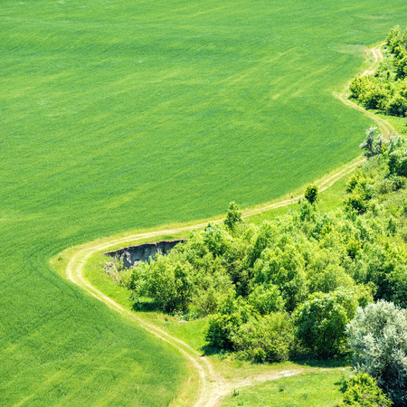 green fields: Landscape with green grass field with nearby forest and country road passing by. Aerial view