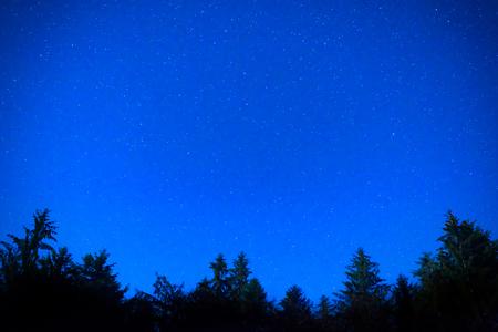 night sky: Dark blue night pine trees over sky with many stars. Milky way background