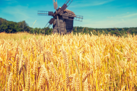 Mill on the wheat field with blue sky