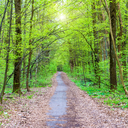 spring landscape: Path in beautiful green park. Spring forest with green trees Stock Photo
