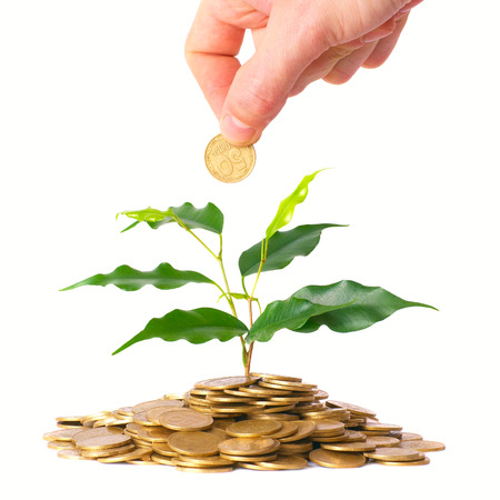 commercial tree care: Hand and green tree growing from the pile of gold coins. Money financial concept.