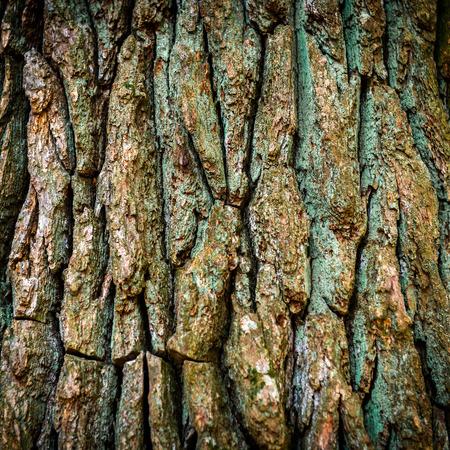 Ciemnobrązowa kora dębu może być stosowany do tła i tekstury Zdjęcie Seryjne