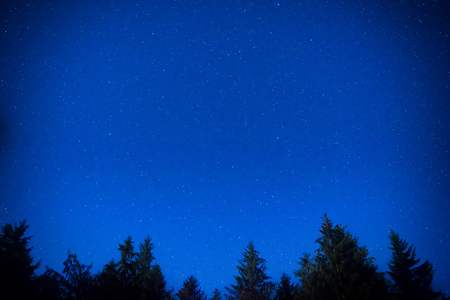 gazing: Dark blue night pine trees over sky with many stars. Milky way background